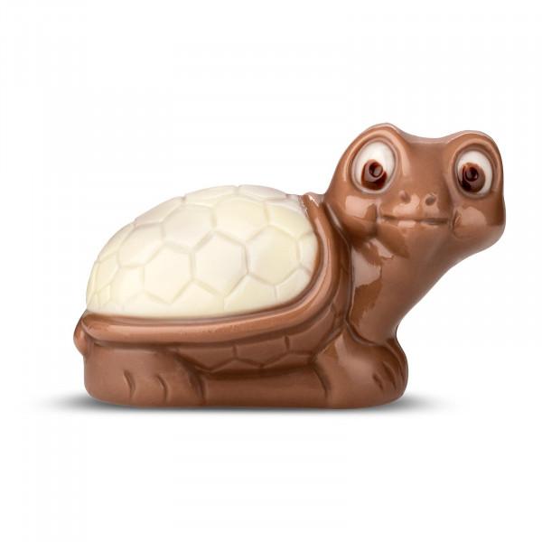 Schildkröte Weiß
