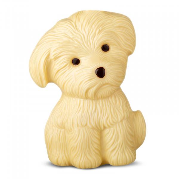 Hund in Geschenkpackung Weiß